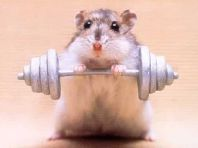 Picture of Kampfhamster